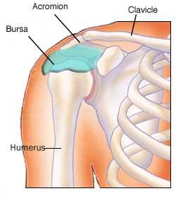shoulder bursitis in melbourne, Human Body